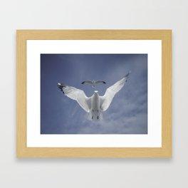 Seagull {Seven} Framed Art Print