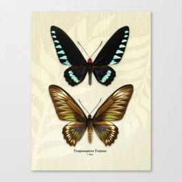 Butterfly16_Trogonoptera Trojana • Pair Canvas Print