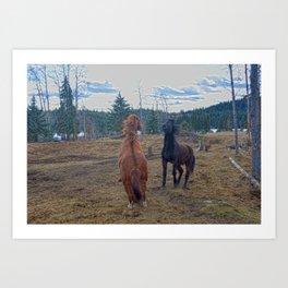 The Challenge - Ranch Horses Fighting Art Print