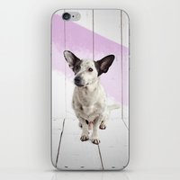 puppy iPhone & iPod Skins featuring puppy by Michael Mann