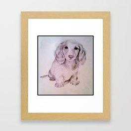 Dachshund Puppy in Graphite Framed Art Print