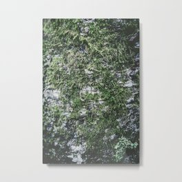 Moss covered tree Metal Print