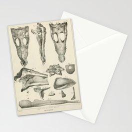 Vintage Scientific Print - 1824 - Crocodile Anatomy Stationery Cards
