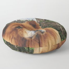 Dog Chow Chow Floor Pillow