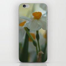 Morning Dream iPhone & iPod Skin
