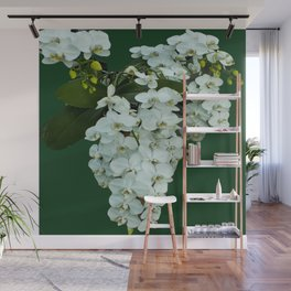 Orchids on the Green Wall Mural