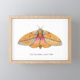 Bisected Honey Locust Moth (Sphingicampa bisecta) Framed Mini Art Print