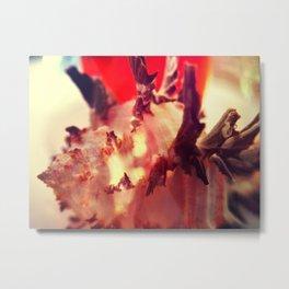 Murex Endivia 1 Metal Print
