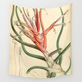 Tillandsia bulbosa var. picta Wall Tapestry