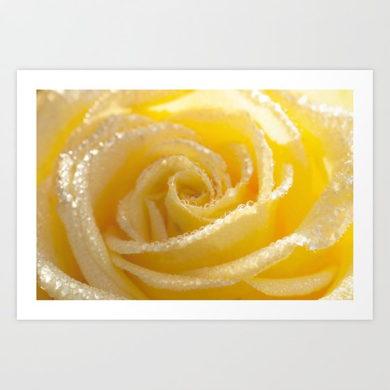 Yellow Romance - Yellow Rose with sparkling waterdrops - Roses Art Print