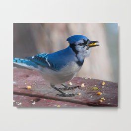 March Blue Jay Metal Print