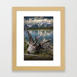 Tree Stump on the Northern Shore of Jackson Lake at Grand Teton National Park Framed Art Print