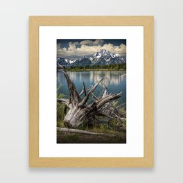Tree Stump on the Northern Shore of Jackson Lake at Grand Teton National Park Framed Art Print