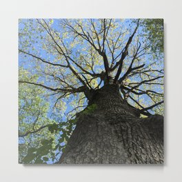 Forest Therapy Metal Print