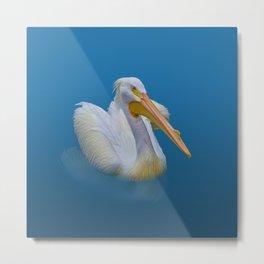 Pelican Reflected Metal Print