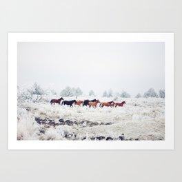 Winter Horse Herd Art Print