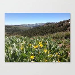 SONORA PASS ELEV 9624 FT - CALIF. Canvas Print