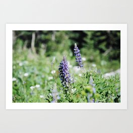 Bluebonnet Wildflowers Art Print