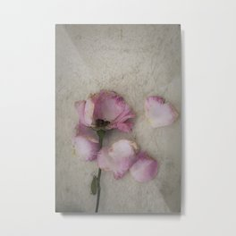 Wilted Rose Metal Print
