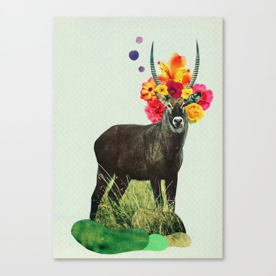 i've been searching for something i've never seen Canvas Print