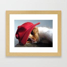 Cute Cat Wearing Red Cap Framed Art Print