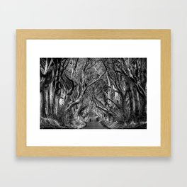 Avenue of trees Framed Art Print