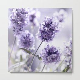 Lavender 292 Metal Print