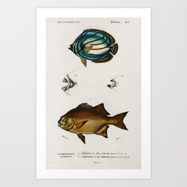 Vintage Print - Universal Dictionary of Natural History (1849) - Butterflyfish; Dichistius Art Print