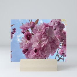 Sakura blossom Mini Art Print