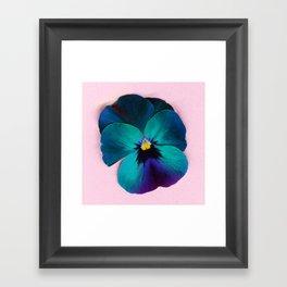 Viola tricolor Framed Art Print