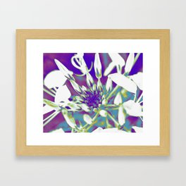 Pop Art Cleome Framed Art Print