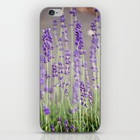 lavender iPhone & iPod Skins featuring Lavender by A Wandering Soul