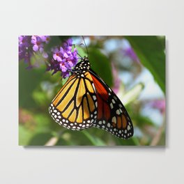 The Monarch! Metal Print
