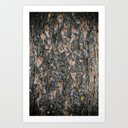 Tree Bark 1.0 Art Print