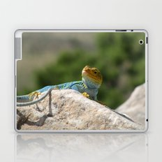 Collared Lizard Laptop & iPad Skin