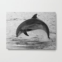 Jumping wild bottlenose dolphin black and white Metal Print
