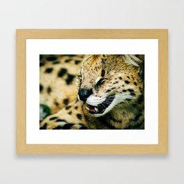 Smiling Serval Framed Art Print