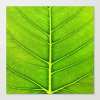 leaf Canvas Prints featuring Leaf by Patterns and Textures