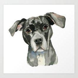 Black Pit Bull Dog Watercolor Portrait Art Print
