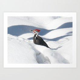 Snowbird 2 Art Print