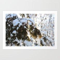 Snowy Cedar Art Print