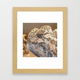 Chameleon With Sinister Facial Expression Framed Art Print