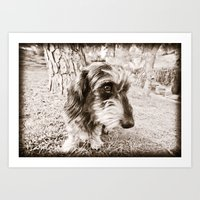 DACKEL DOG #37 Art Print