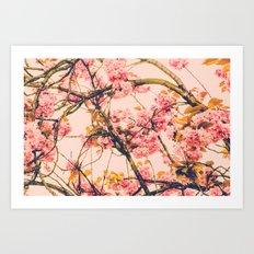 sweet sweet cherry blossoms Art Print