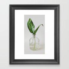Two Green Leaves in a Glass Vase Framed Art Print