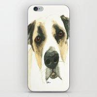floyd iPhone & iPod Skins featuring Floyd by Carolyn Campbell