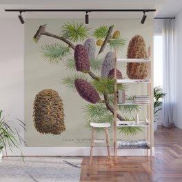 Pine Cone Larix Griffithii Vintage Botanical Floral Flower Plant Scientific Illustration Wall Mural