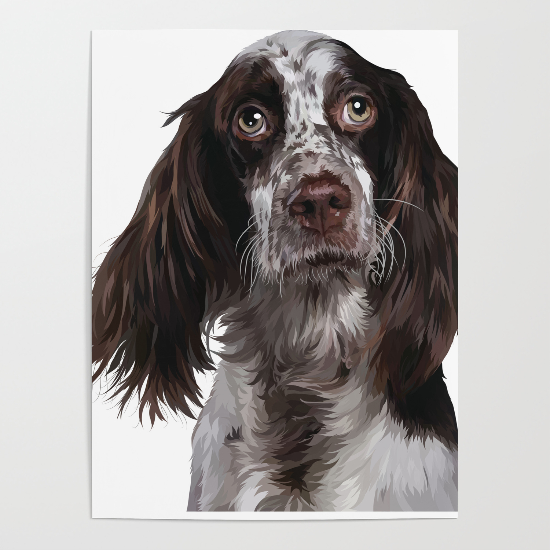 English Springer Spaniel Puppy Dog