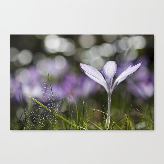 Blue Spring Flower  Crocus - Floral Canvas Print