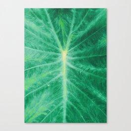 Colocasia Esculenta Canvas Print